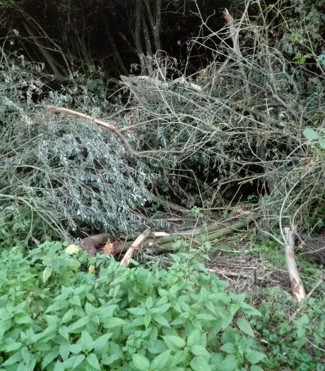Groenwerkers Geldrop gingen niet woest tekeer, maar juist bedachtzaam