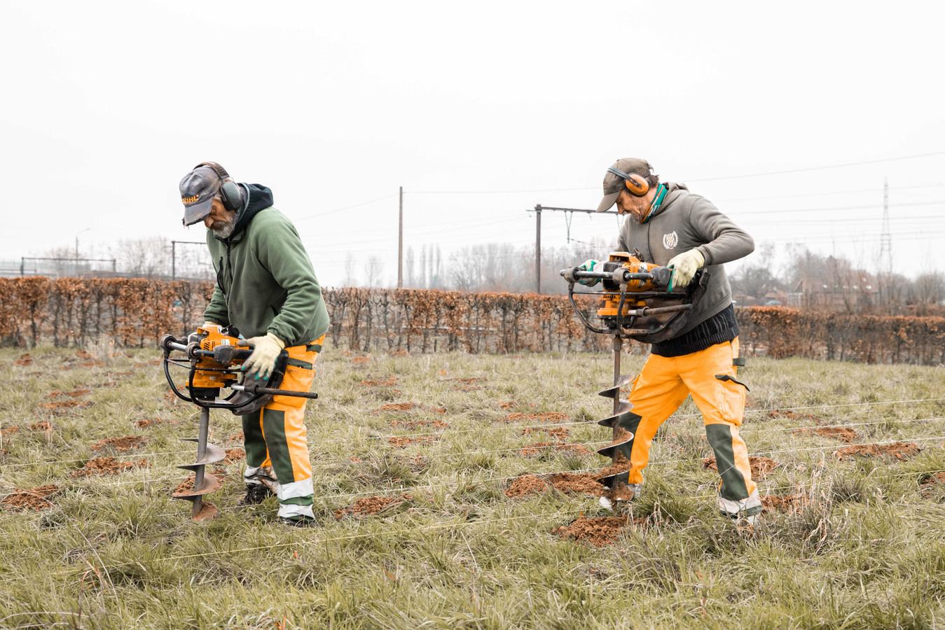 Arbeiders van ProNatura aan de slag bij het bewerken van de grond in de geboorteboomgaard.