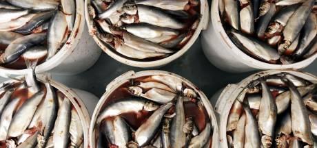 Lekker en winstgevend: onderzoek naar opzet lokale visketen Den Haag