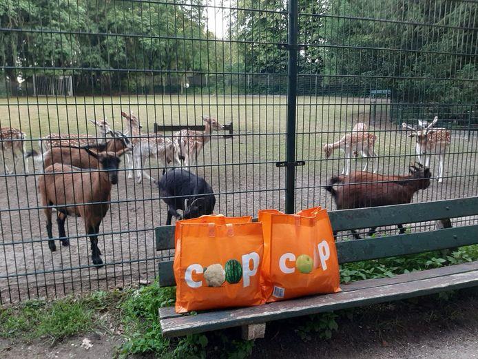Debby van der Laan komt regelmatig verse groenten brengen bij de herten en de geiten.