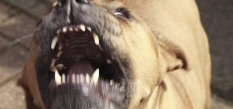Pitbulls afgemaakt na aanval op eigenaar