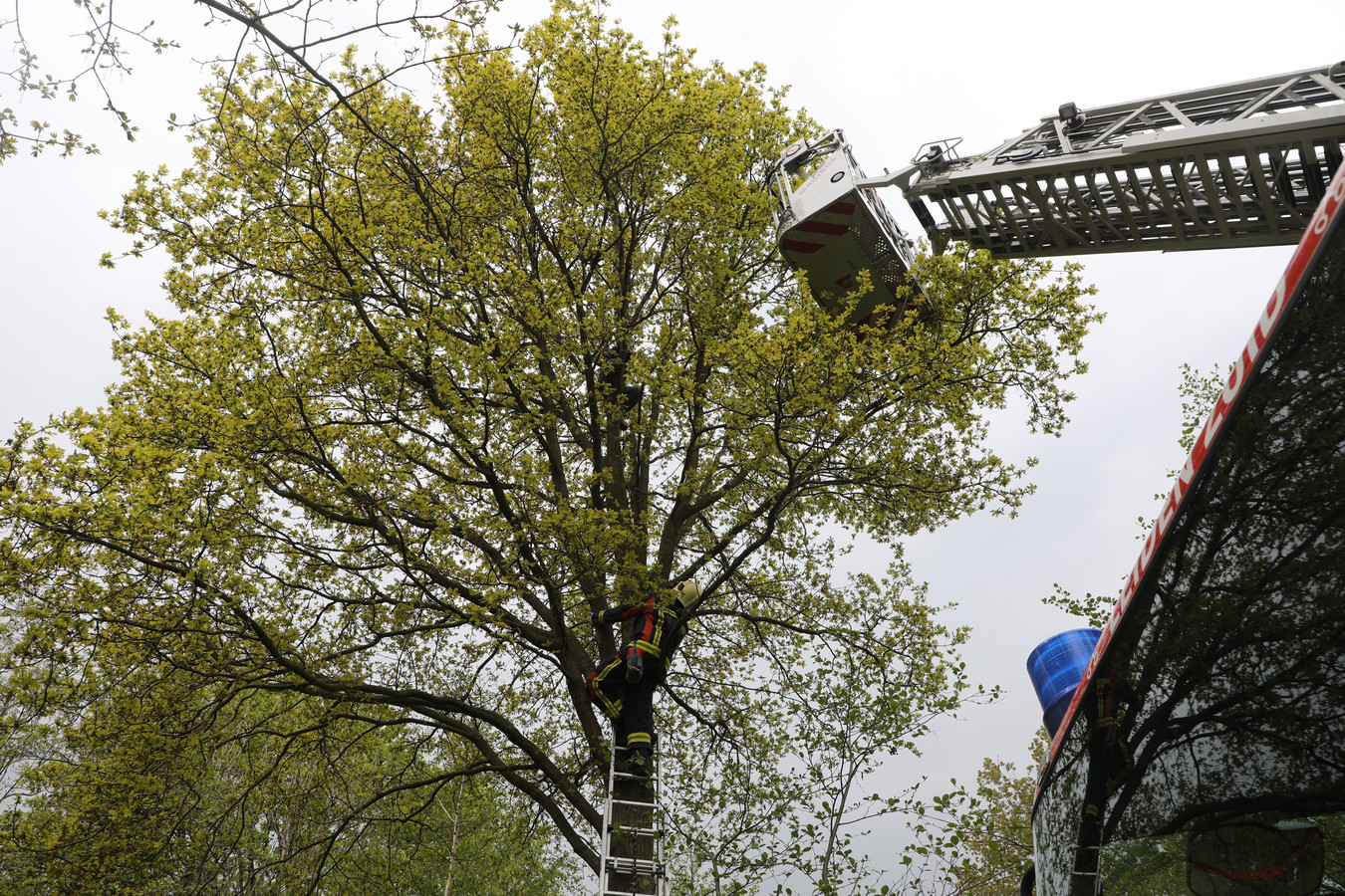 Vrouw vast in boom na reddingspoging kat in Voorschoten.