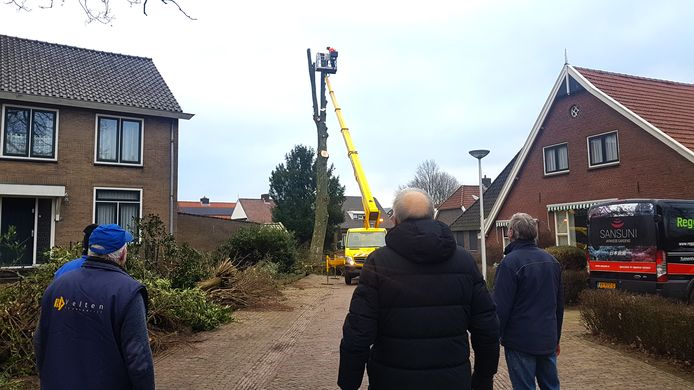 Belangstellende Enternaren kijken hoe de beeldbepalende esdoorn achter het kerkeiland aan de Werfstraat sneuvelt voor de geplande nieuwbouw.