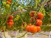 Greenports: 'Levering groente en fruit komt door de coronacrisis in gevaar'
