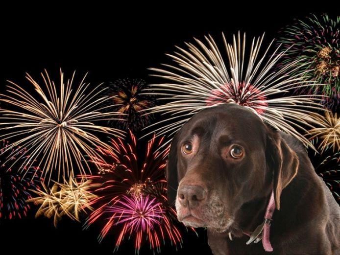 Veel honden en katten zijn bang voor vuurwerk
