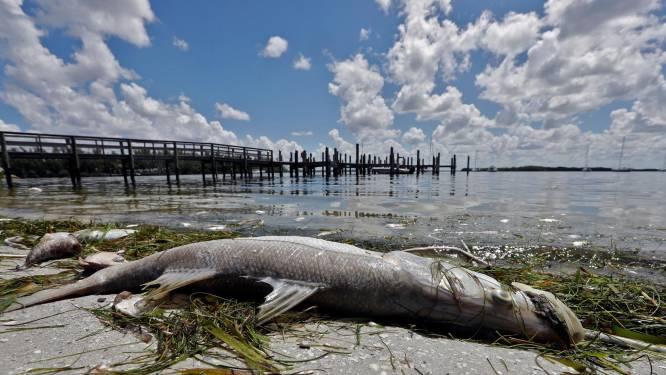 """En Floride, une """"marée rouge"""" décime la faune aquatique"""