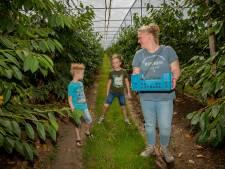 Fruitigste Dagen in Alphen: gasten proeven de kersen van de verlate oogst