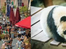 Nieuws gemist? Pandababy viert eerste verjaardag en waarom is bier op het terras duurder?