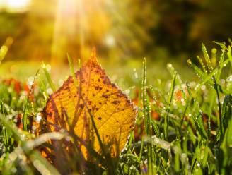#laatzeliggen: Vosselaar vraagt inwoners gevallen bladeren te gebruiken als meststof