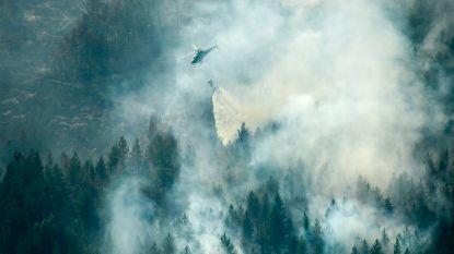 Dorpen geëvacueerd door grote bosbranden in Zweden