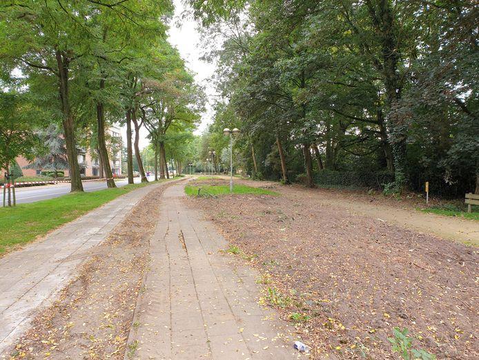 Voor de aanleg van het nieuwe fietspad moesten enkele bomen wijken maar er komen nieuwe exemplaren in de plaats.
