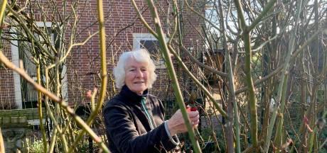 Mary (77) snoeit al haar 320 rozen nog zelf: 'Eigenwijsheid is ook wijsheid toch?'