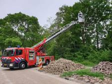 Kat in Hengelo na nacht in boom gered door brandweer