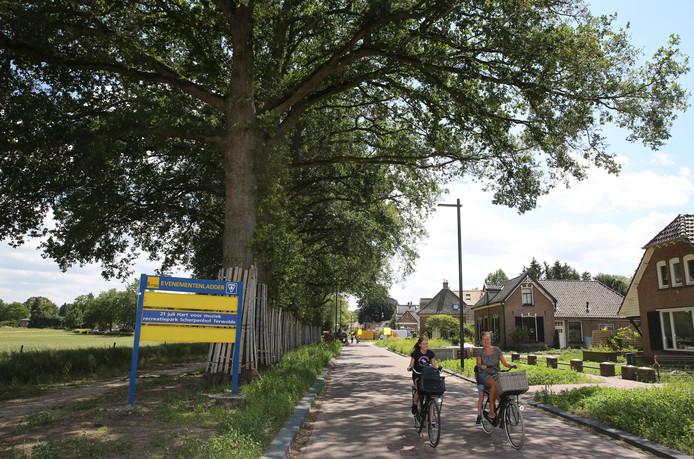 De eiken die nu langs de Rijksstraatweg in Voorst staan, blijven er staan. Straks komen er veel andere boomsoorten bij.
