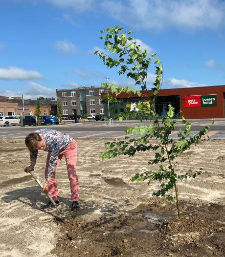 Star Sock-ondernemer Eric Roosen plant berk als protest tegen kale parkeervlakte voor de Lidl in Oisterwijk