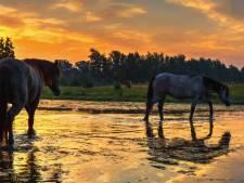 Prachtig begin van de dag met kleurrijke zonsopkomst in Twente