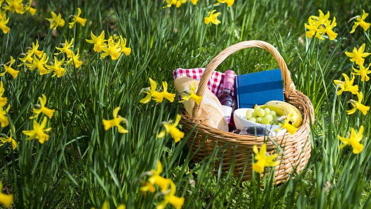 Picknick. Beeld anp