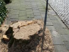 Amersfoort kapt 563 zieke bomen