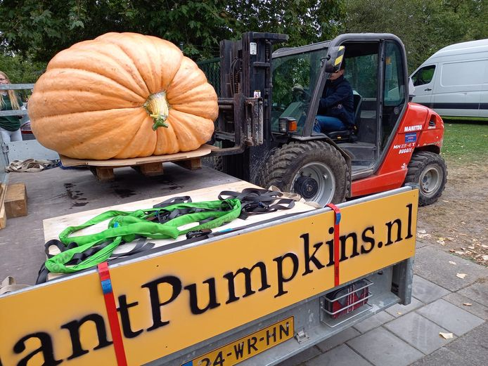 De pompoen van Gerjan Puttenstein uit Wezep wordt door een shovel op de aanhanger geladen en naar Utrecht gereden. Daar werd de pompoen tot mooiste van Nederland gekroond.