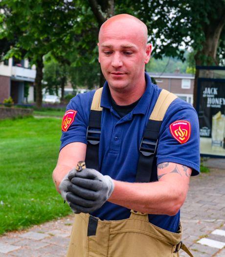 Brandweer Apeldoorn heeft hoogwerker nodig om eendjes uit riool te halen