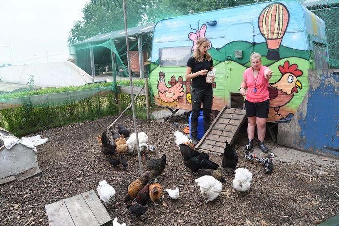 Maaike van Ameijde en Mees (15) voeren samen de kippen bij melkvee- en zorgboerderij De Bollendonk in Etten-Leur.