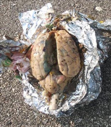 Nog steeds geen verklaring voor gruwelijke vondst van ingepakte hersenen op strand