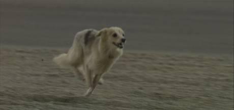 Hond die circuit oprende in Bahrein maakt het goed en wacht op een naam