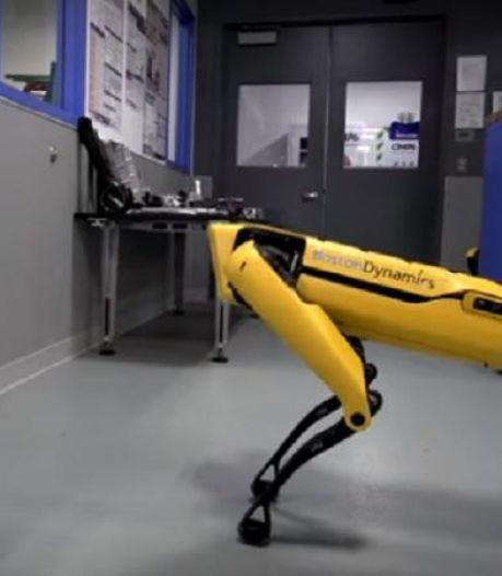 Des robots quadrupèdes à la fois fascinants et effrayants