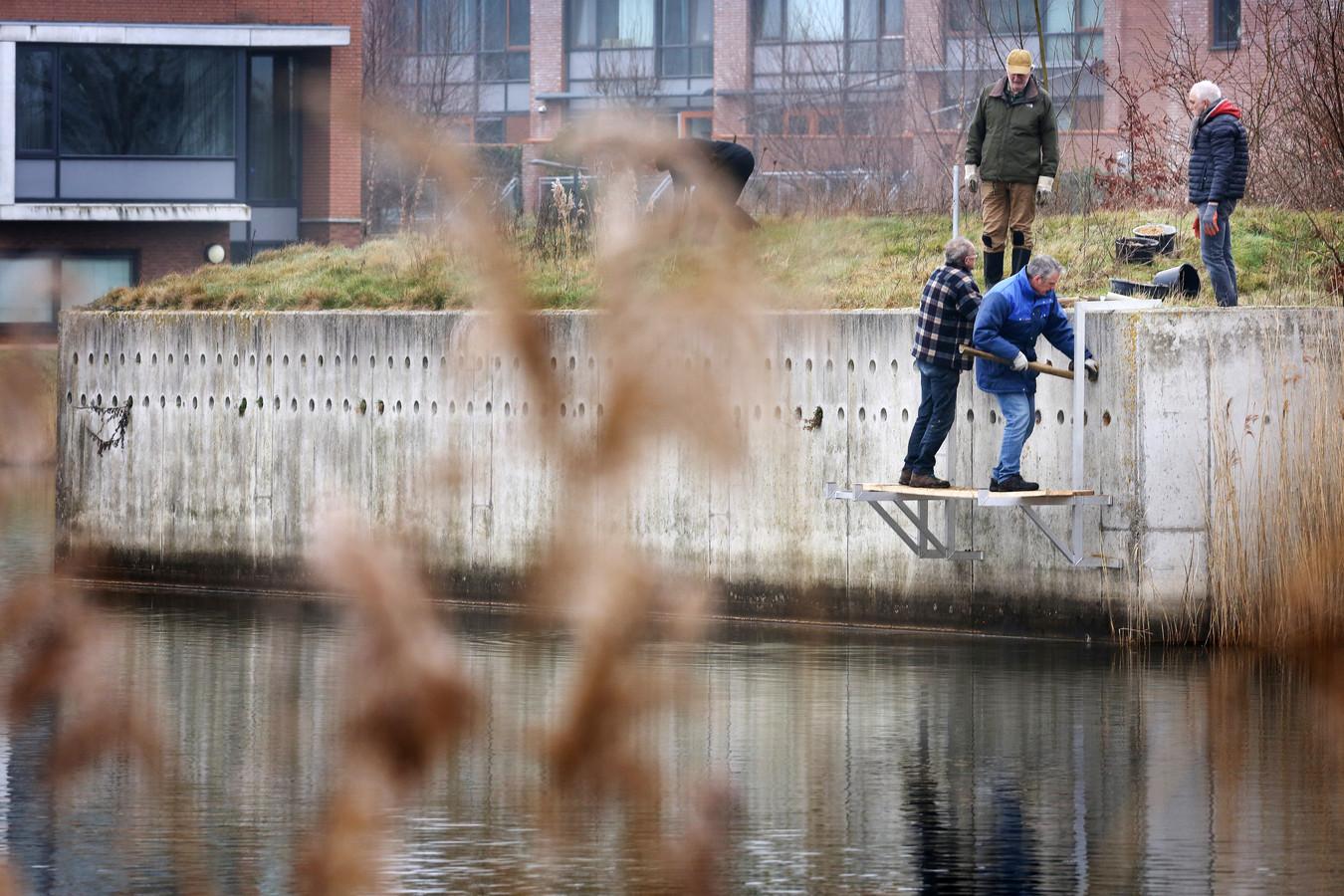 Vrijwilligers van de vogelwerkgroep West-Brabant makent de oeverzwaluw-wand in de Waterdonken gereed voor het nieuwe seizoen.