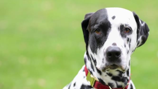 Buurman hondenschool bevreesd voor geblaf; trainster verwacht dat 'ze daarvoor veel te druk bezig zijn'