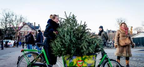 Ieder jaar dezelfde boom, is dat wel zo duurzaam?