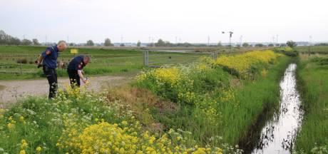 Honderden liters chemische stoffen gedumpt in natuurgebied bij Zuidland