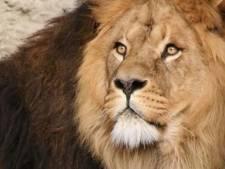Le tueur du lion Cecil est un dentiste américain
