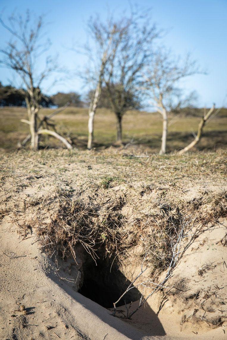 De ingang van een bewoonde vossenburcht Beeld Dingena Mol