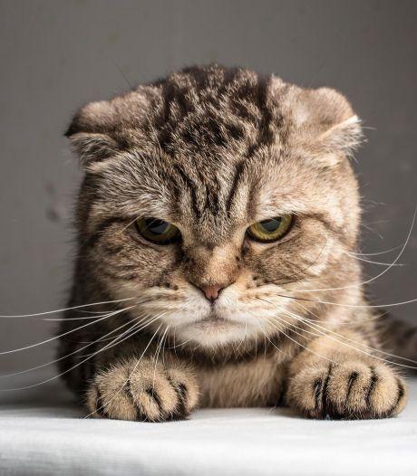 'Als katten écht dol op je zijn, mag je even aan hun gatje snuffelen'