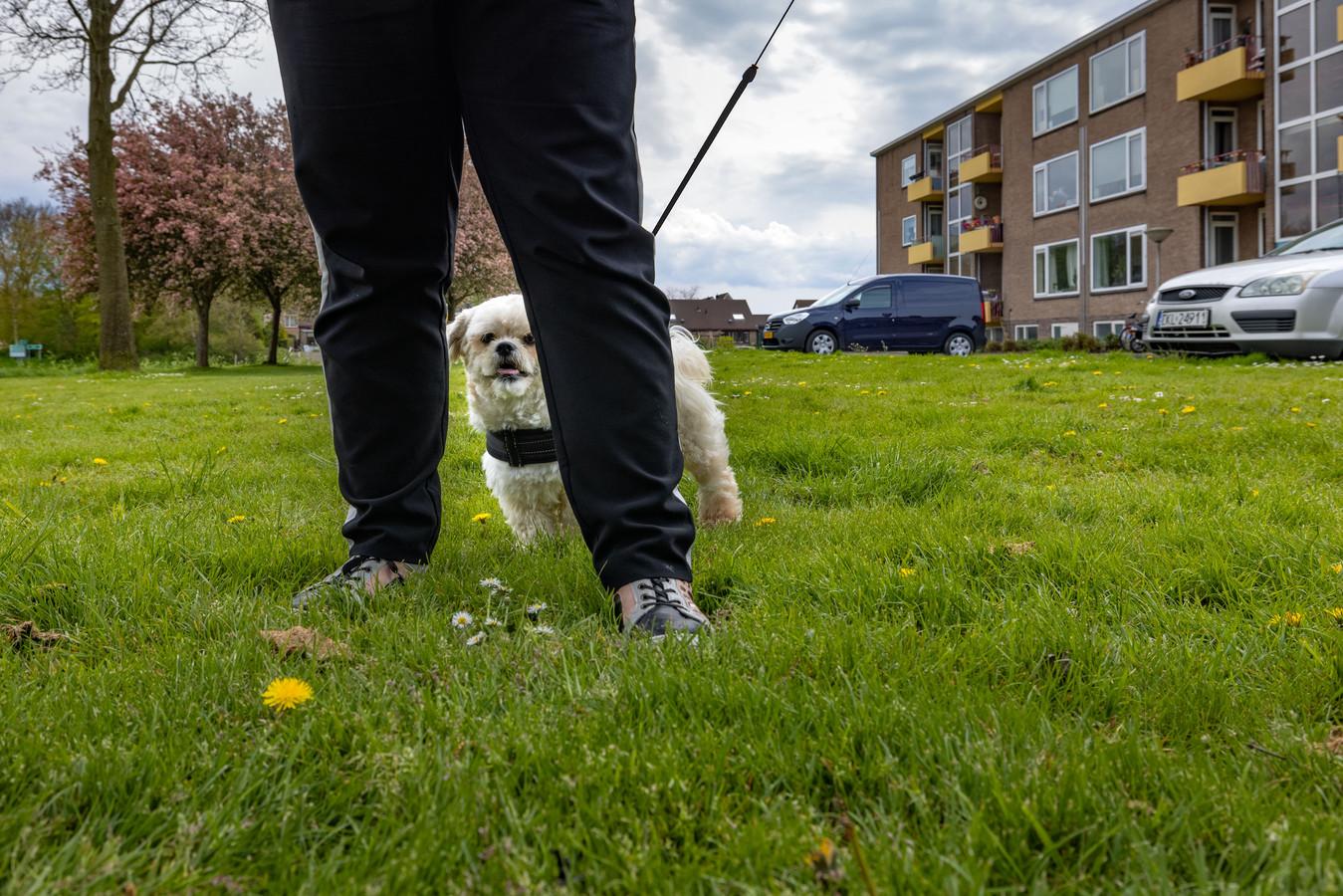Op een grasveldje aan de Schoenerstraat in Emmeloord zijn op twee verschillende momenten hondenpoten gevonden. De hond leefde waarschijnlijk nog op het moment dat poten zijn afgehakt.