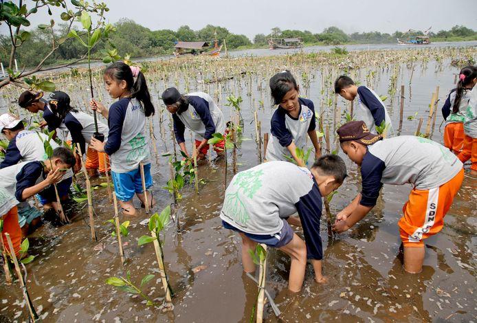 Leerlingen planten bomen in Jakarta Bay in Jakarta, Indonesië. Archiefbeeld.