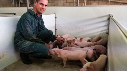 """Boer Piet draait muziek voor zijn varkens om ze gelukkiger te maken: """"Ze horen het liefst country"""""""