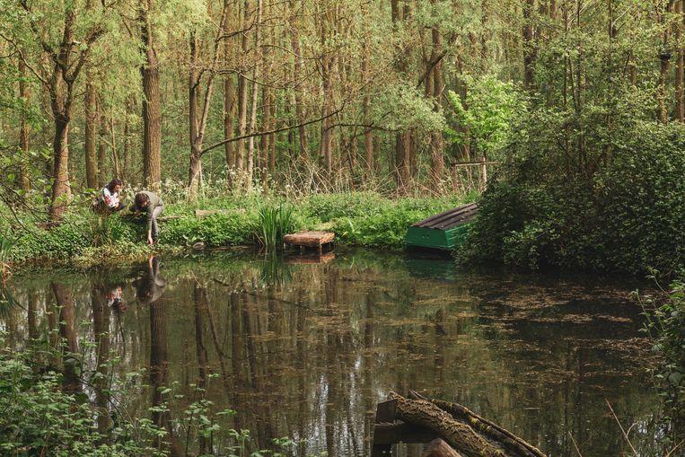 Charlot Reynaert en Toon Roosen plukken watermunt aan de rand van de vijver in hun voedselbos.  Beeld Jens Vanden Abeele