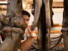 Zo bouwt Achterhoeker Mickel (45) een exacte kopie van de 12 meter lange dinosaurus Trix