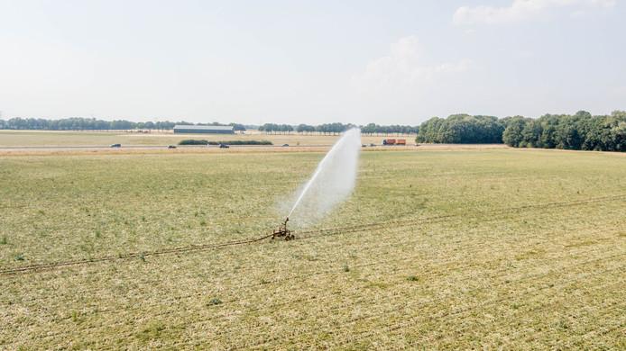 Op plaatsen waar nog geen sproeiverbod geldt, proberen boeren en tuinders hun gewassen in leven te houden door ze te beregenen.