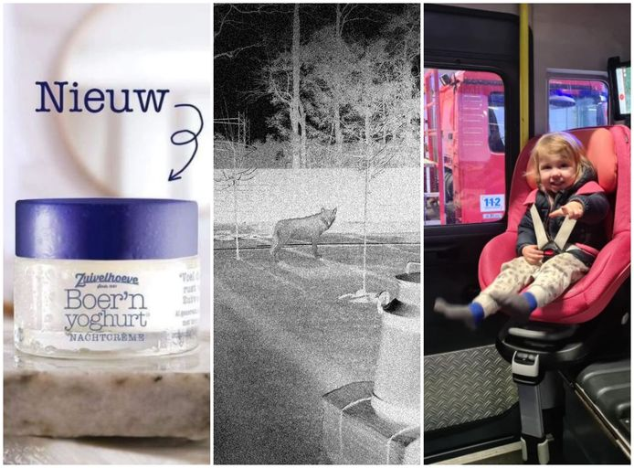 Heerlijke nachtcrème van de Zuivelhoeve (links), een wolf in Hellendoorn en een kind de brandweerwagen