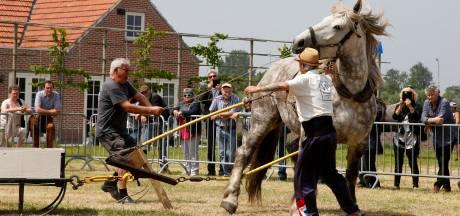 Paardentrek in Eede: pure topsport