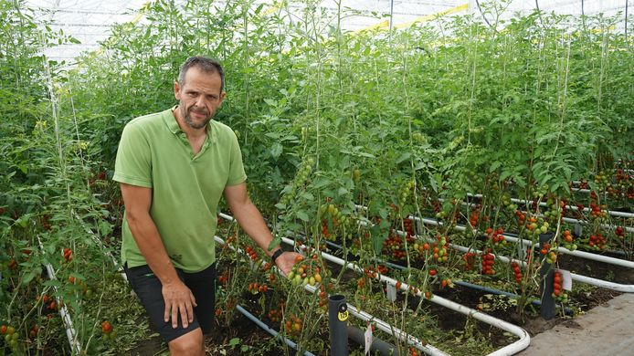 Koen Van Hauteghem in de gloednieuwe serres van het biologisch tomatenbedrijf Vitaetom.