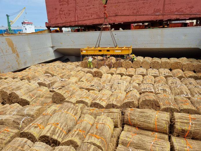 Riethandelaar Girbe van Rees uit Genemuiden importeert riet per bulkschip uit China omdat de kosten van transport per zeecontainer torenhoog zijn.