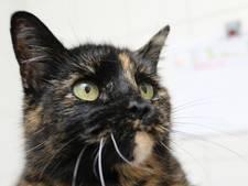 Schok in woonwijk Bergen op Zoom om bruut vermoorde katten, dierenpolitie bezig met onderzoek