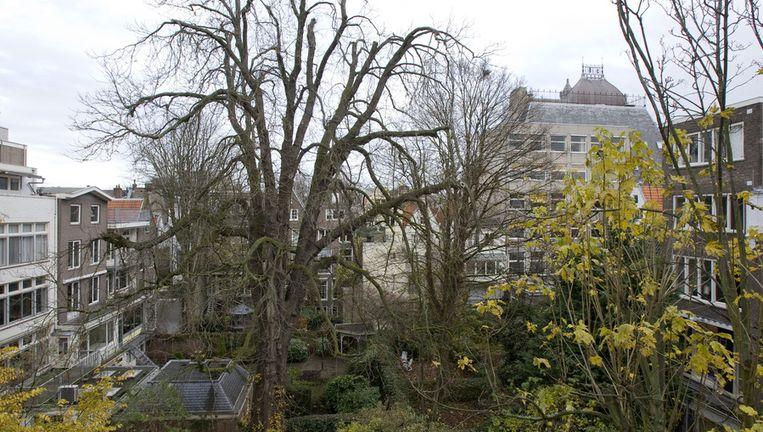 De kastanjeboom die Anne Frank beschrijft in haar dagboek. Beeld Archieffoto ANP, 2007.