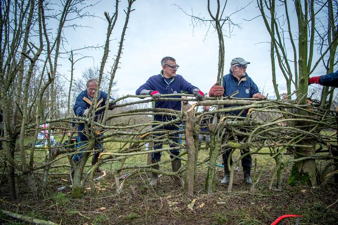 Ieder jaar is er het Nederlands kampioenschap Maasheggenvlechten.