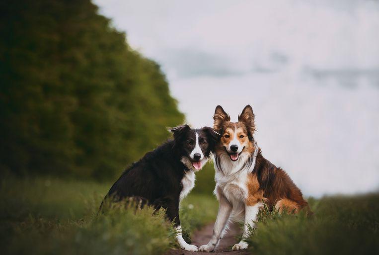 welke hond past bij mij? Beeld Getty Images/500px