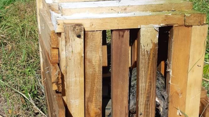 Dierenbeul gooit kat in houten kistje vol stenen in het water, dier overleden